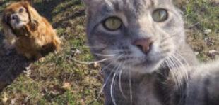 Кот сделал селфи и стал знаменит